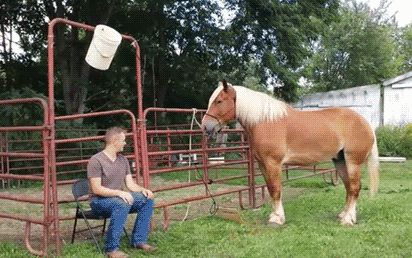 Horse Seems Pleased To Be Doing That