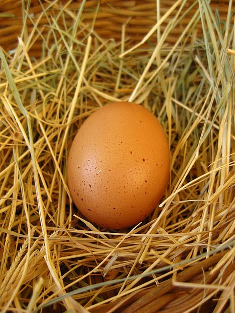 ....fresh eggs everyday! let me tell you, laying hens are mean when you try to get their eggs