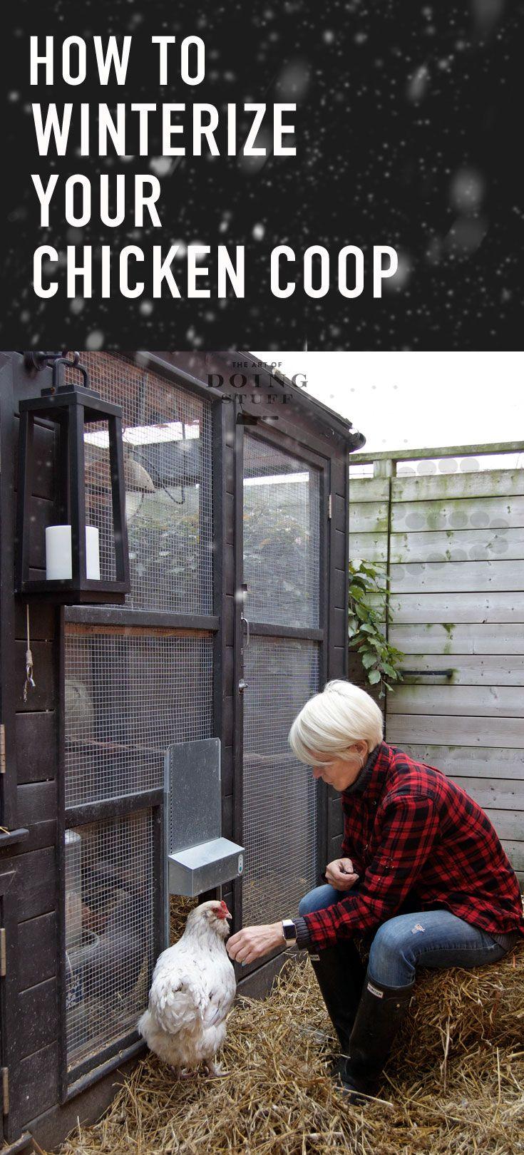 Winterize a chicken coop