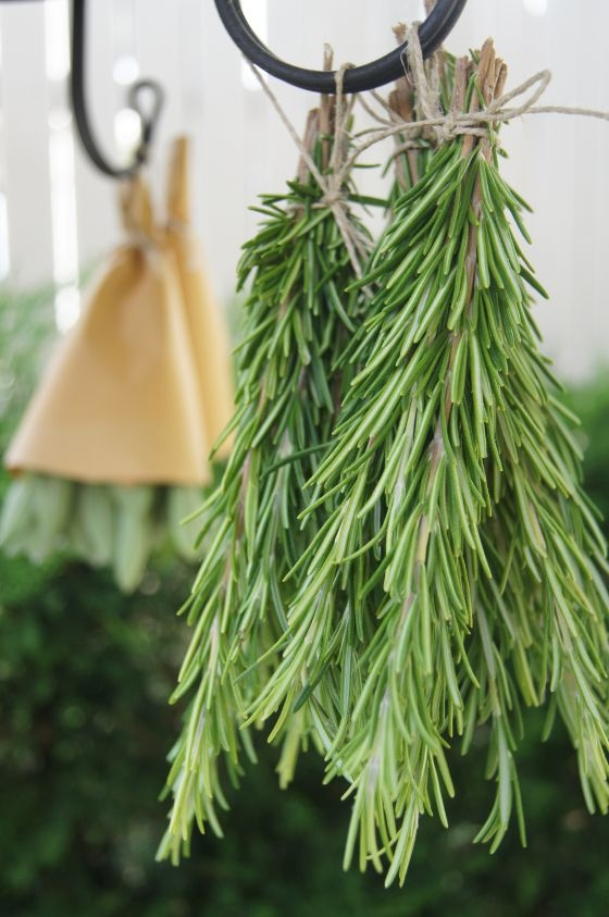 rosemary , you need this I your garden , oils etc.