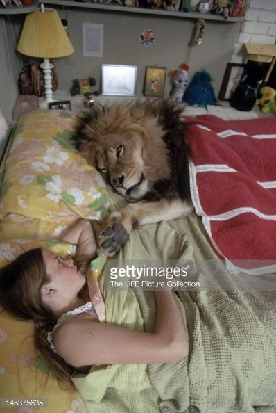 American future actress Melanie Griffith lies in bed beside her pet lion Neil, who lies under a blanket, Sherman Oaks, California, May 1971.