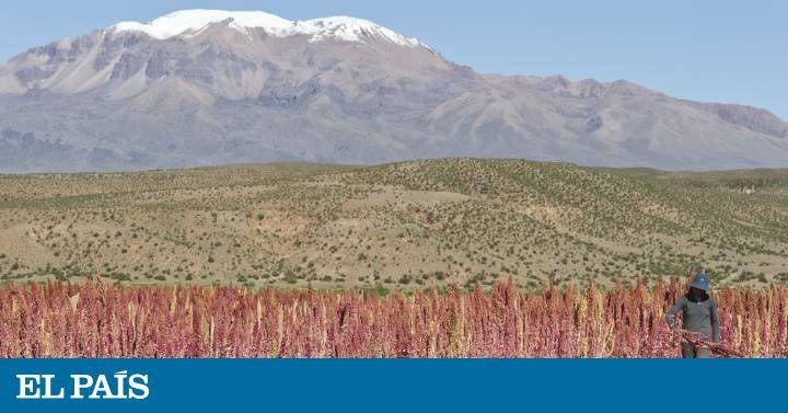 El continente busca rentabilizar su elevada producción agrícola con materias primas más saludables y productos innovadores, orgánicos y que respeten el medio ambiente
