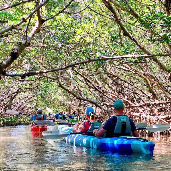 Shell Key Preserve Kayak Tour St. Petersburg in 2020 | Kayak tours