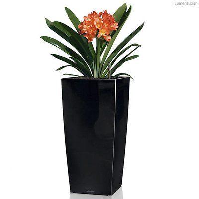 """Lechuza Cubico Self-Watering Pot Planter Color: Black, Size: 30"""" H x 16"""" W x 16"""" D"""