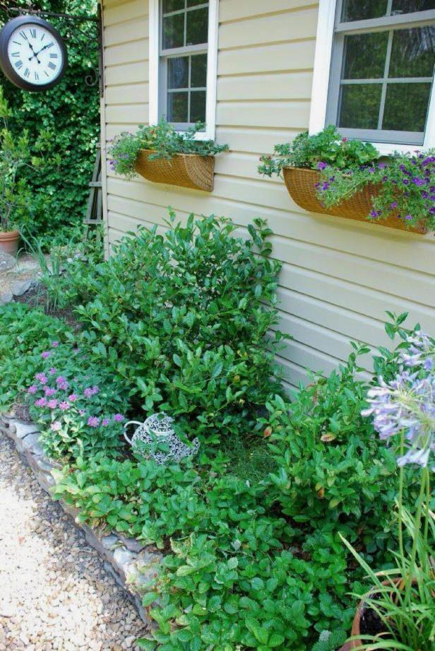 Grow your own tea garden.