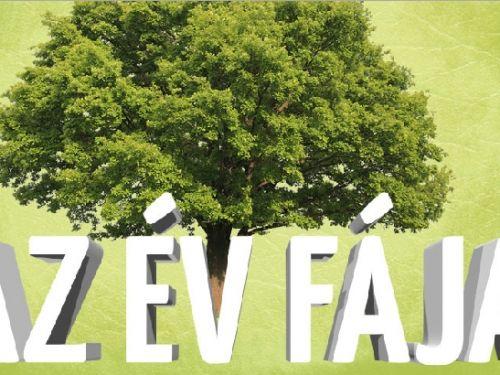 Az Év fája 2014 Még mindig versenyben van a tatai nagy platán az Év Fája címért!