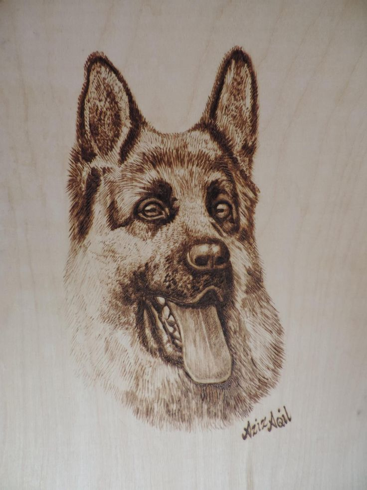 180 best PYROGRAPHY DOGS CATS
