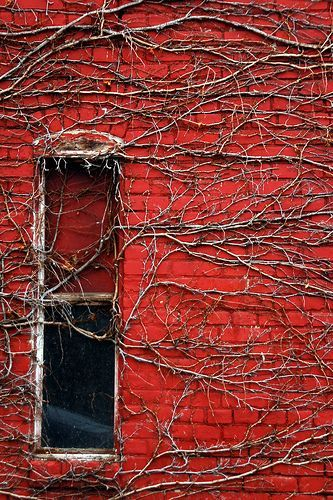 Window in Red: Red Brick Exterior, Glorious Red, Red Wall, Vines, Red Brick Wall, Red Houses, Red Window, Red Overgrowth, Red Black