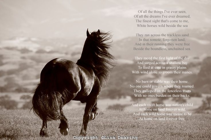 Images Of Horses On The Beach With Sayings