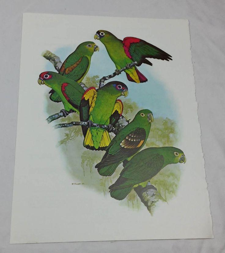 Parrotlets vogel afdrukken William Cooper (1972)-B100004 door DSOddsEnds op Etsy https://www.etsy.com/nl/listing/476737254/parrotlets-vogel-afdrukken-william