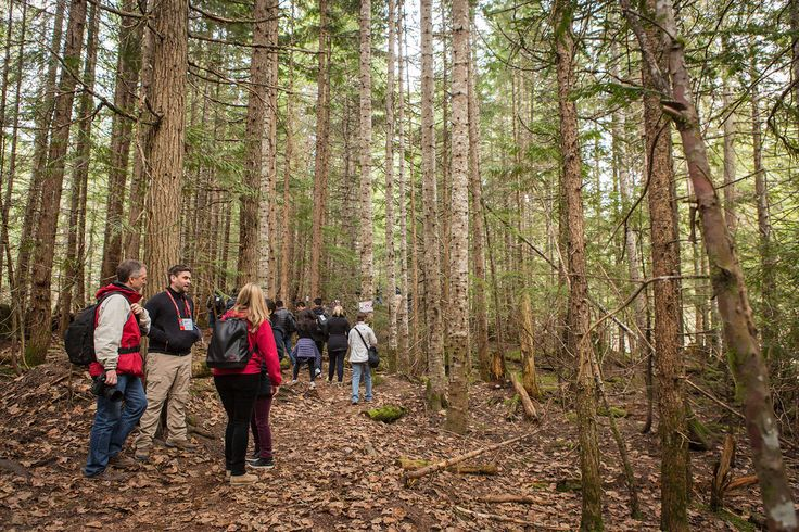 Nature Walk, TEDActive 2015 - Truth and Dare, March 16-20, 2015, Whistler…