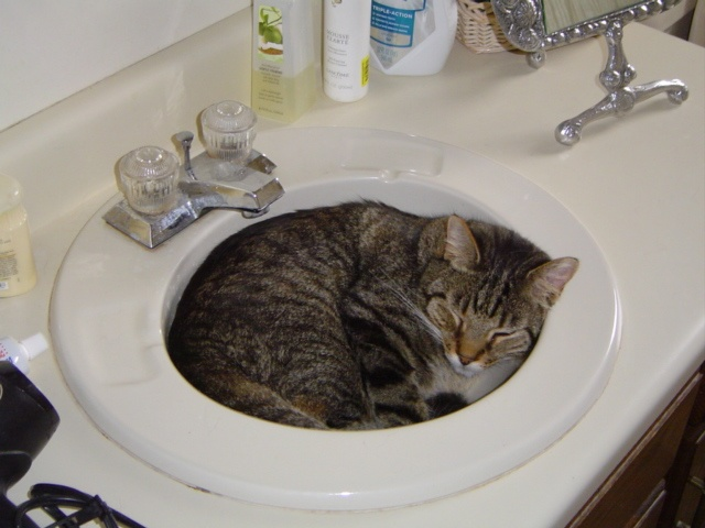 YOU, use the sink downstairs, please. My Gray loved this cozy spot.