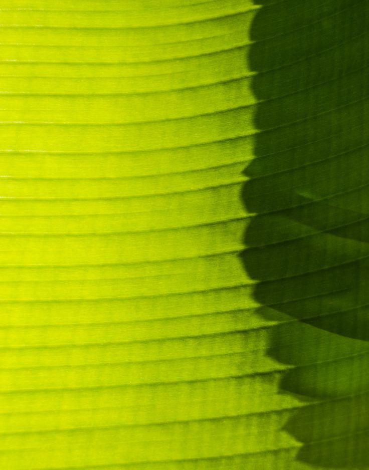 Palm Sun-day