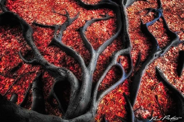 Black tree roots and red leaves