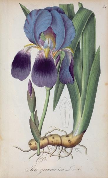 'flora' asset search - Bridgeman - Art, Culture, History