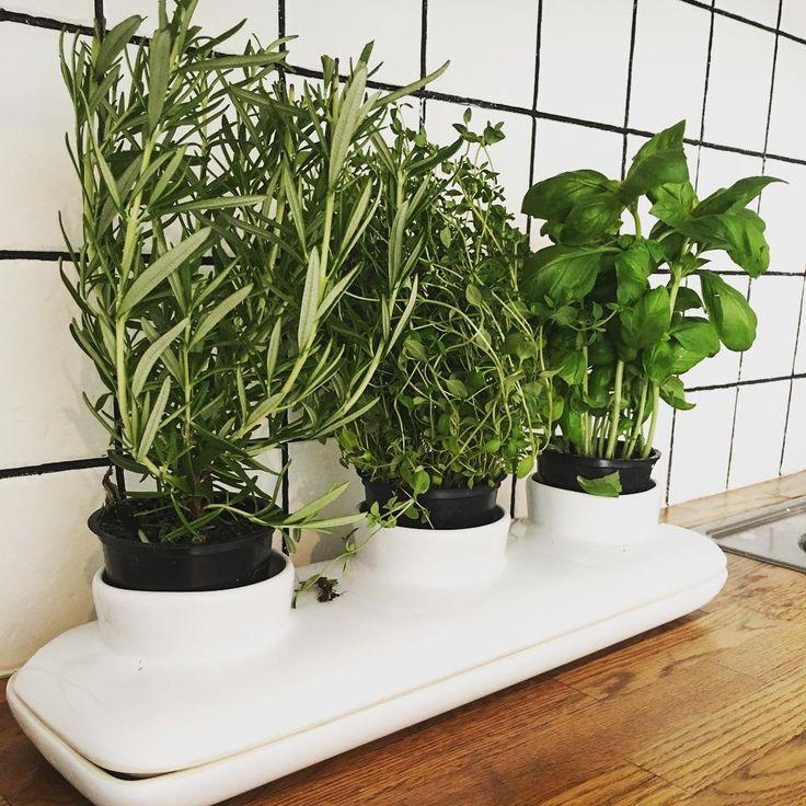 Uschlé kytky jsou ode dneška minulostí ☘ Stačí pouze nalít vodu a o zbytek se postará květináč sám  Nemusíte na nic myslet, nemusíte hlídat teplotu vody. Pak už stačí pouze s nůžkami nastříhat čerstvou várku voňavých bylinek a přidat je do jídla  Mňam
