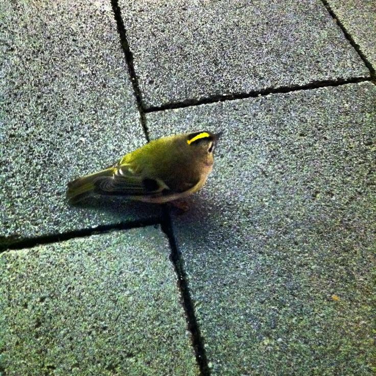 vermoeid vogeltje in grote stad