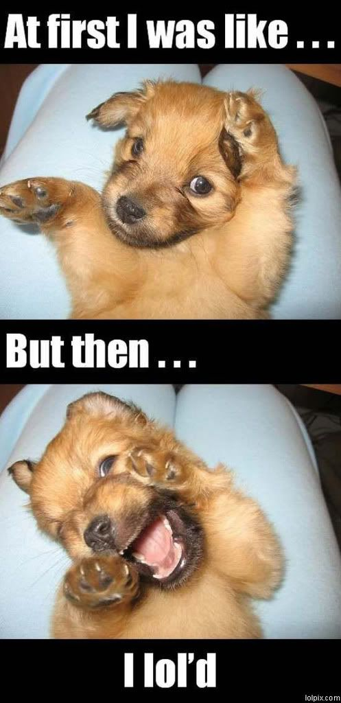 Petbragger's collection of the funniest dog memes.  #petbrag