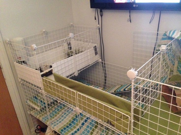 New C&C cage for my 2 girls