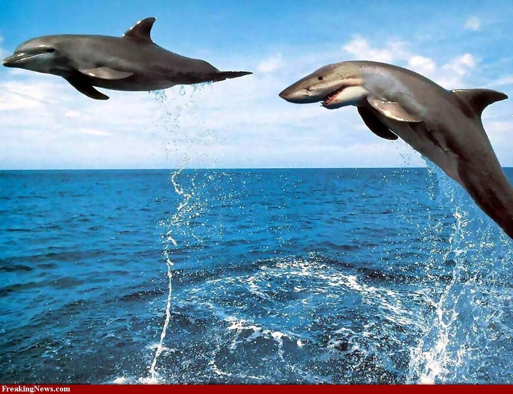 Cute Saying Hd Wallpapers Dolphin Shark Sharphin Or Dolark Hybrid Sharks