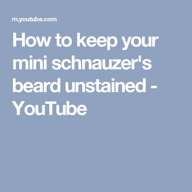 How to keep your mini schnauzer's beard unstained - YouTube