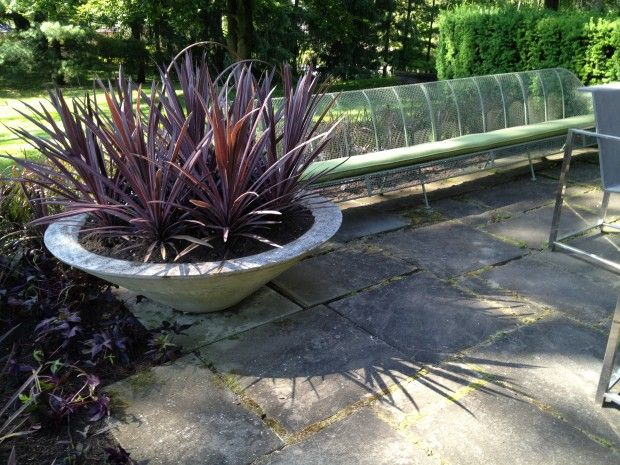 red-cordylines - contemporary planting