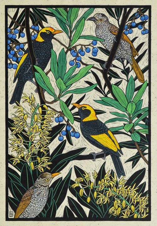 Regent Bowerbird 76 x 51 cm    Edition of 50 Hand coloured linocut on handmade Japanese paper $1,400