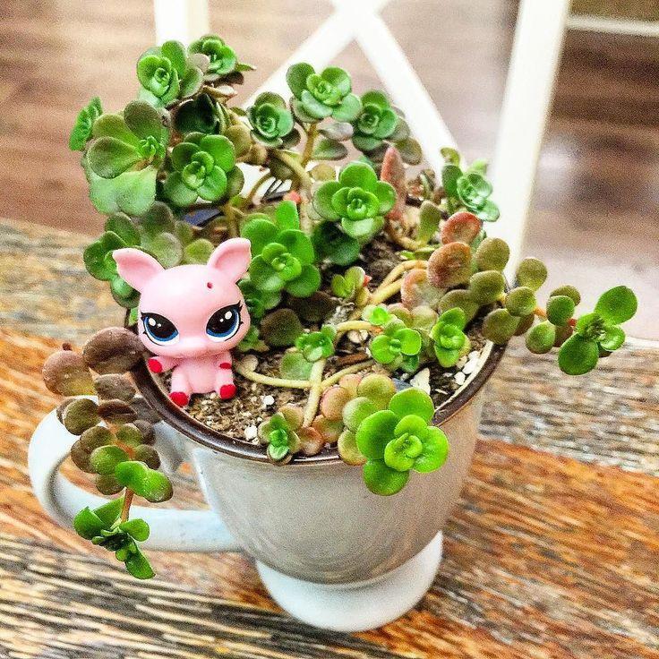 Sevimli Miniş ve sukulent #succulentlove #sedum #sukulent #succulent #succulents #cactus #plants #plants #nature #doğa #damkoruğu by gokcekucukyazici