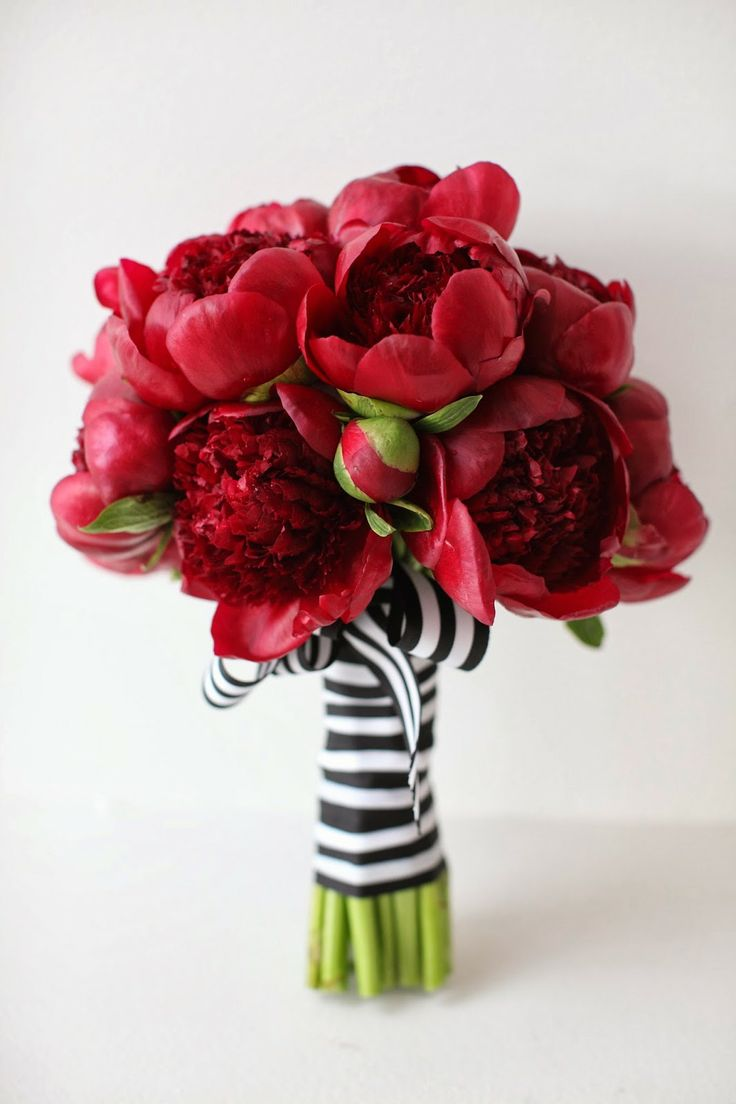 Deep red peonies with striped black and white ribbon, stunning!