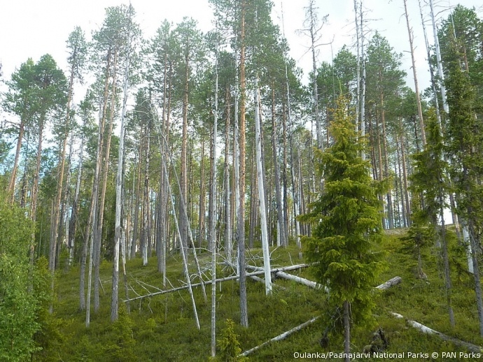 Wilderness in Oulanka/Paanajärvi National Parks, the first transboundary wilderness area  http://www.panparks.org/newsroom/news/2012/wilderness-does-not-stop-at-borders#