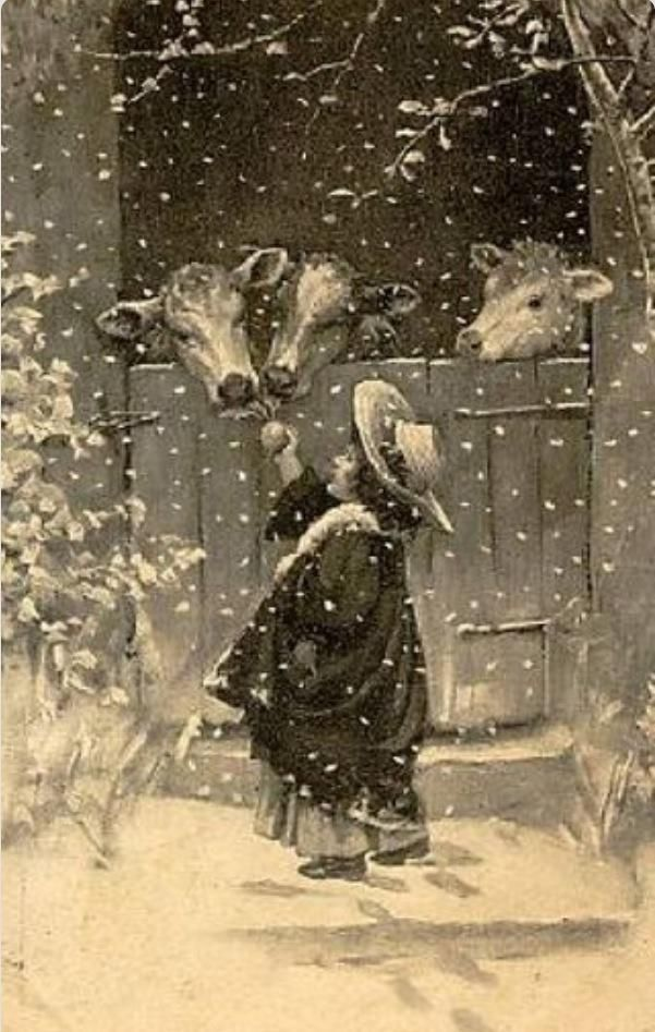 Vintage art - A little girl feeds a snack to a trio of calves on a snowy day.