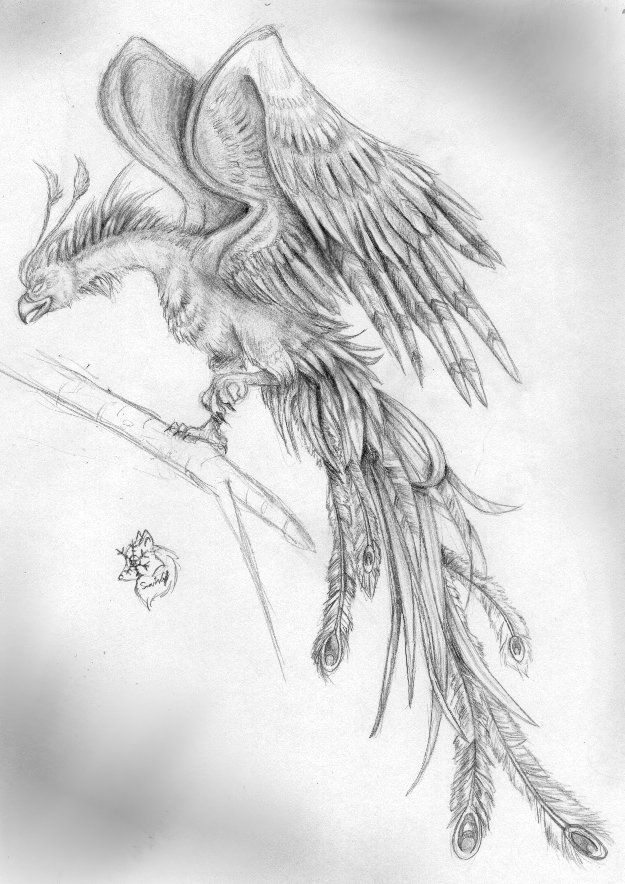 drawing of the phoenix bird | Chinese Phoenix by ...