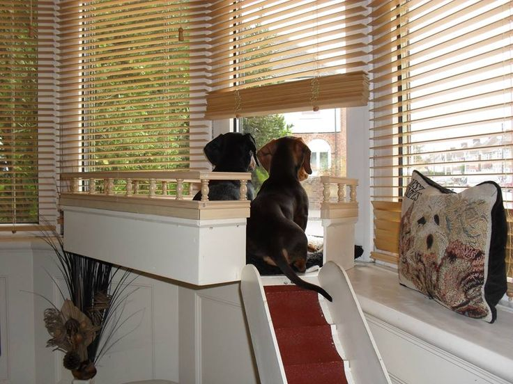 Best 25 Dog Window Seat Ideas On Pinterest Cat Window