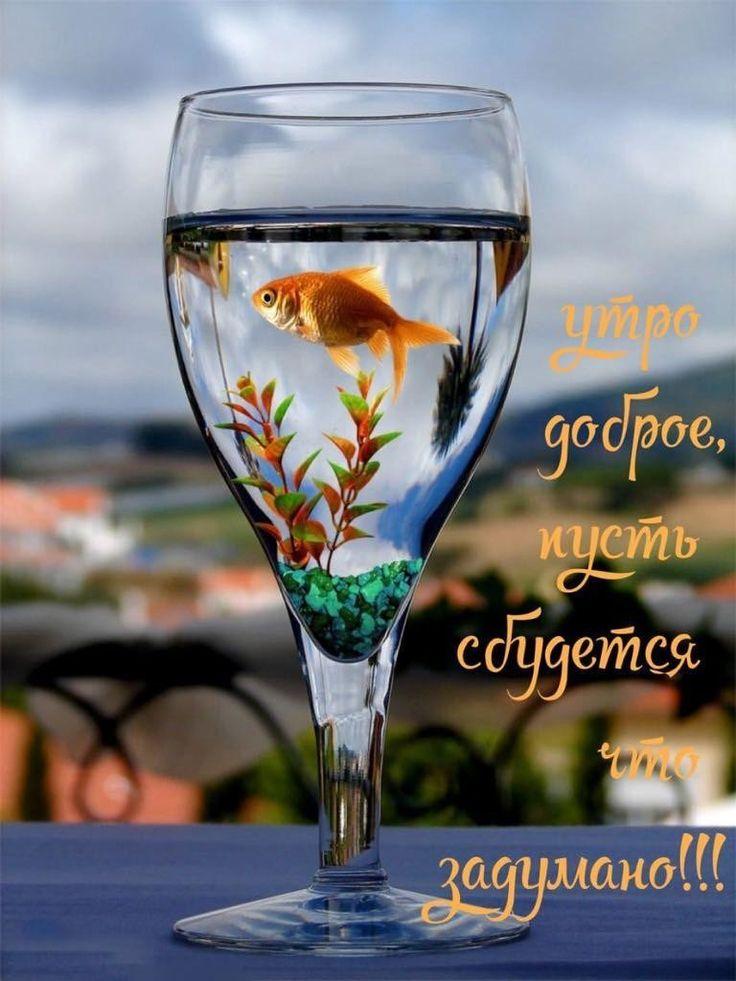 Картинки с рыбками доброе утро