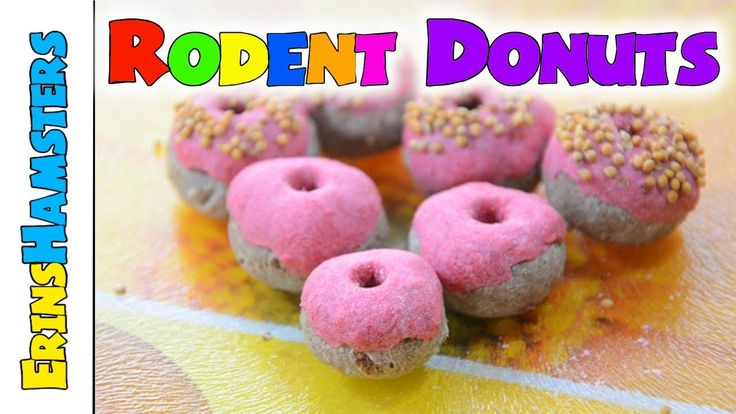 HAMSTER DONUTS | Rodent Treats These are so cute! But if I can't eat donuts, why should they? ;)