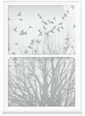 Window Films of Birds in Flight II - Grey by Nic Miller Photography (1000mm x 1500mm) | Shop | Surface View