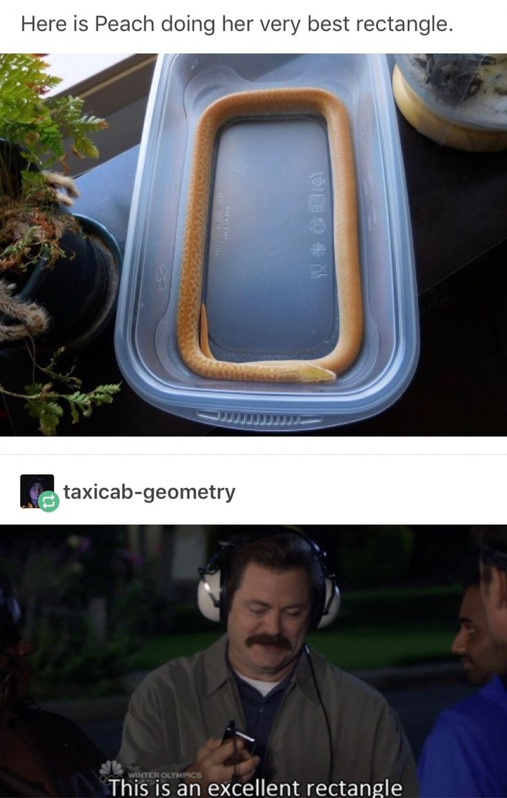 Parks and rec fandom takes over post for the first time.