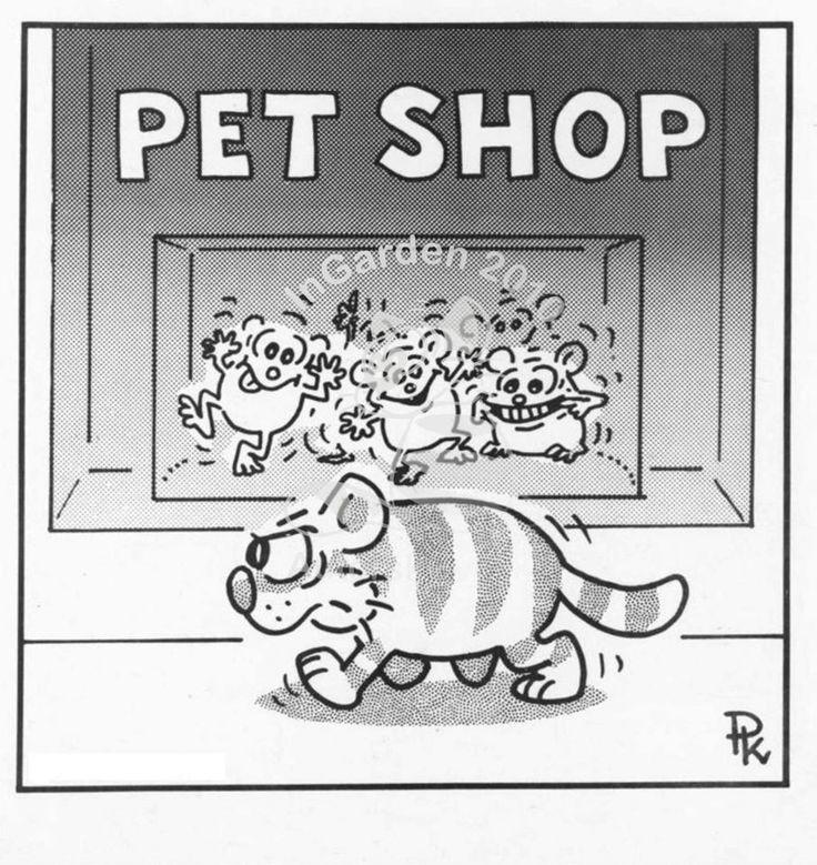kočky a myši, Kantorek