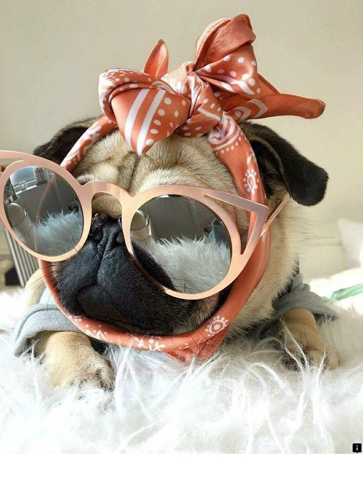 Sunglasses Pug Sticker Cute Pugs Pugs Puppies