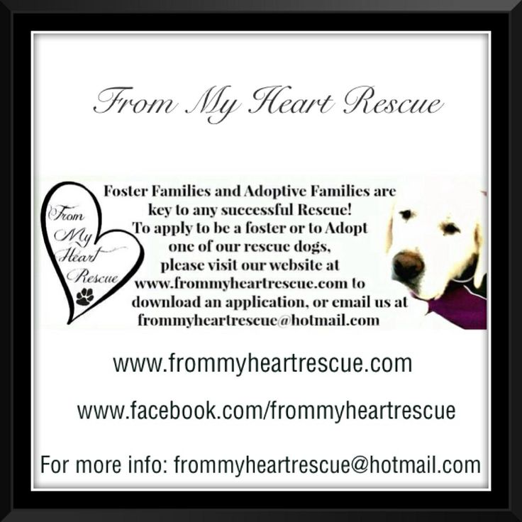 To become a member of our FMHR foster/adoption family, please send us an email. *To make a donation to our rescue, please call our vet, Brock Street Animal Hospital c/o FMHR  ~ (905) 430-2655  ~frommyheartrescue@hotmail.com ~www.frommyheartrescue.com ~www.petfinder.com/shelters/ON441.html ~www.facebook.com/frommyheartrescue ~www.twitter.com/FMHRnonprofit ~www.instagram.com/frommyheartrescue