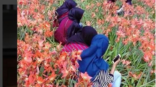 Setelah Kebun Bunga Amaryllis Rusak Terinjak-injak, Ini Tindakan Camat Setempat - Harian Luwak