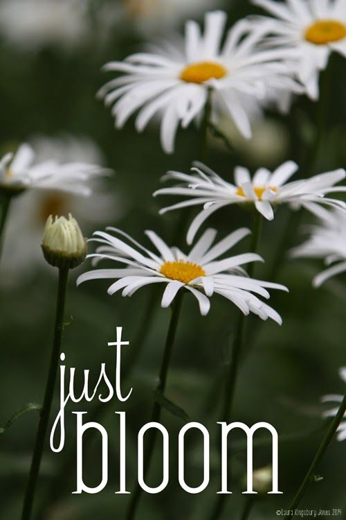 Just Bloom: A Daisy of a Post & Free Photo Download | Left on Peninsula Road #freeprintable #daisies #photography