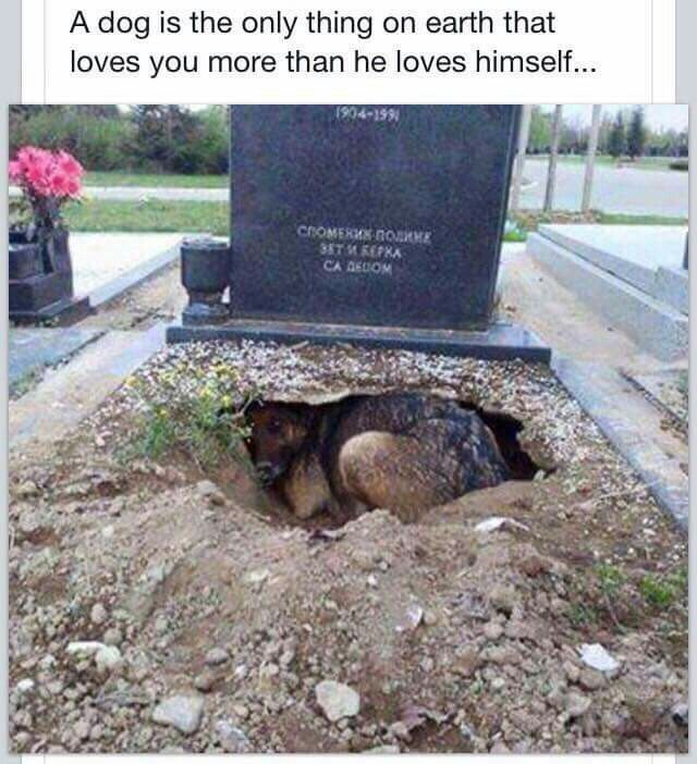 This is a profound picture that describes the love of a pet. Wow