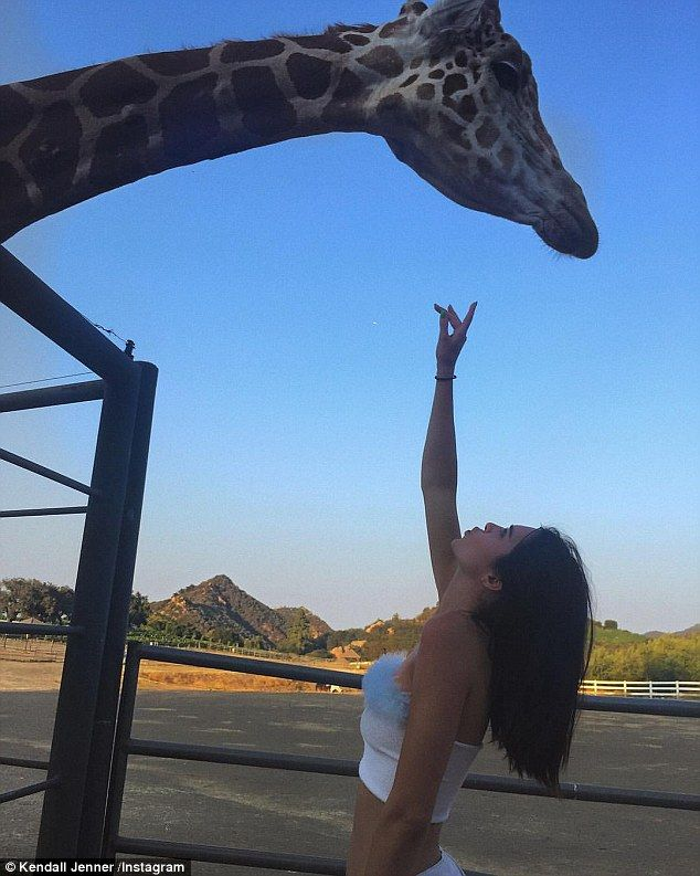 Kendall Jenner cozies up to giraffe while wearing crop top