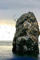Rainbow Tours in Homer Alaska. Seldovia wildlife tours and half day halibut fishing charters Kachemak Bay Homer AK