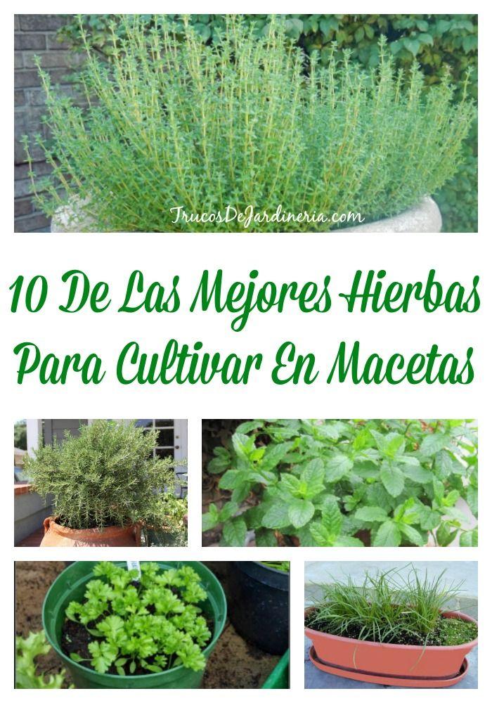 10 De Las Mejores Hierbas Para Cultivar En Macetas
