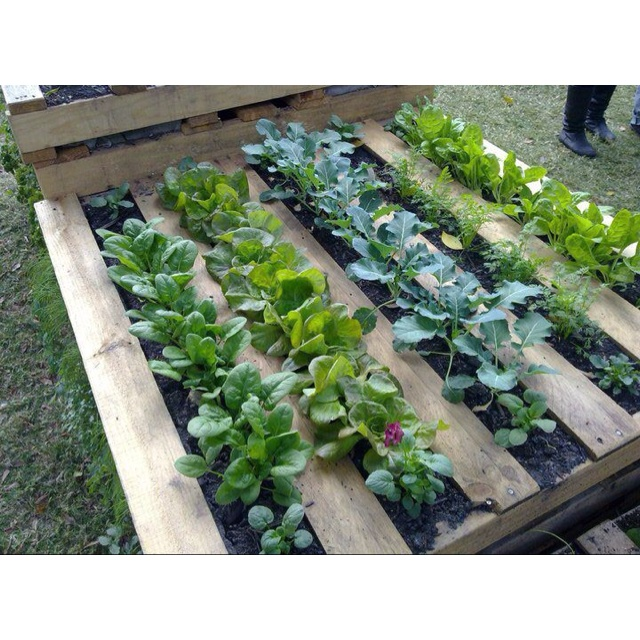 Veggie patch in a pallet - clever upcycling!