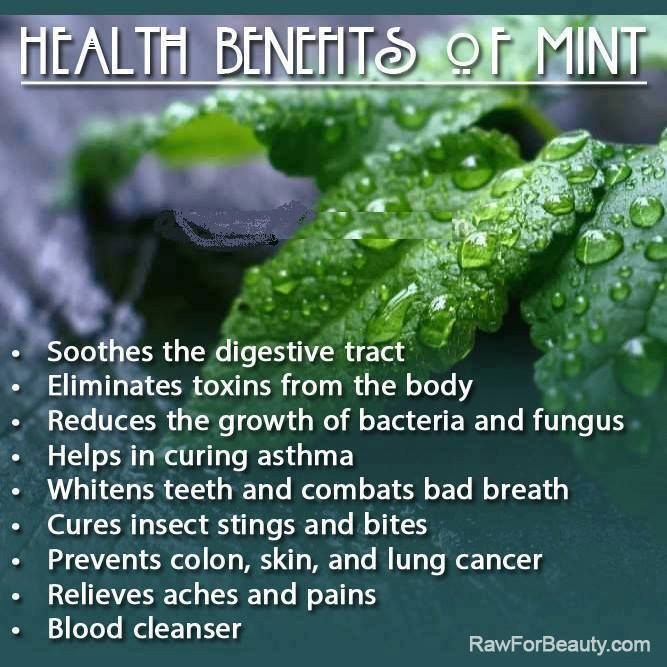 I try to have a peppermint tea almost every night, so delicious and a plethora of health benefits!