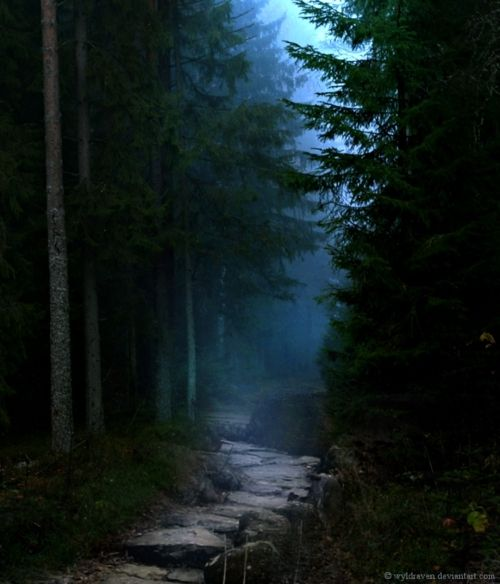 The Midnight PathWood, Midnight Paths, Creepy Dark Fantasy Goth, Moonlit Paths, Beautiful Places, Dark Forests, Moonlit Gardens Paths, Pathways, Beautiful Pictures
