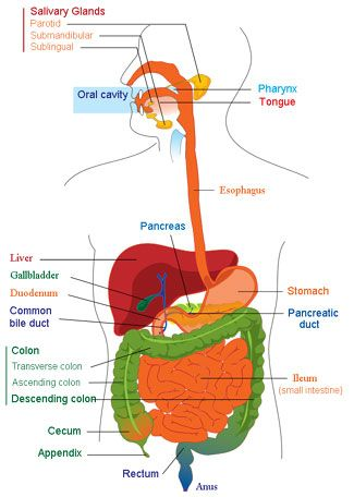 Home Remedies for Proper Digestion